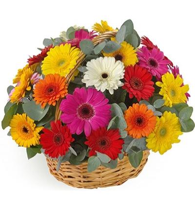 Çiçek Sepette Gerberalar