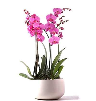 karma Çiçek demeti Mor Orkideler