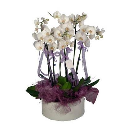 pembe listantus buketi 6 Dal Beyaz Orkide