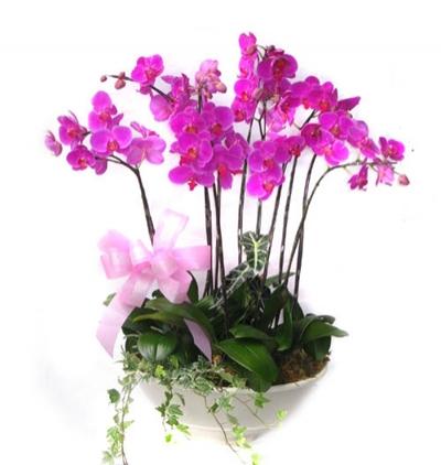 seramikte 4 dal orkide 6 Dal Mor Orkide