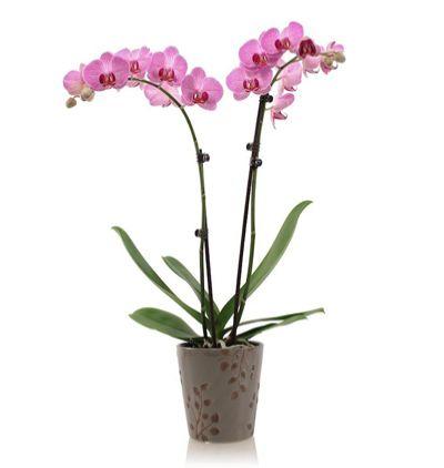 karma Çiçek demeti Phalanopsis Orkide