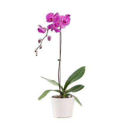 karma Çiçek buketi Tekli Mor Orkide